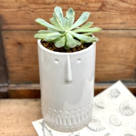 Face pot succulent planter