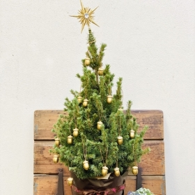 LIving Christmas With Decorating Kit